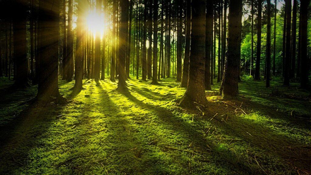Door de bomen het bos niet kunnen zien als je gaat scheiden